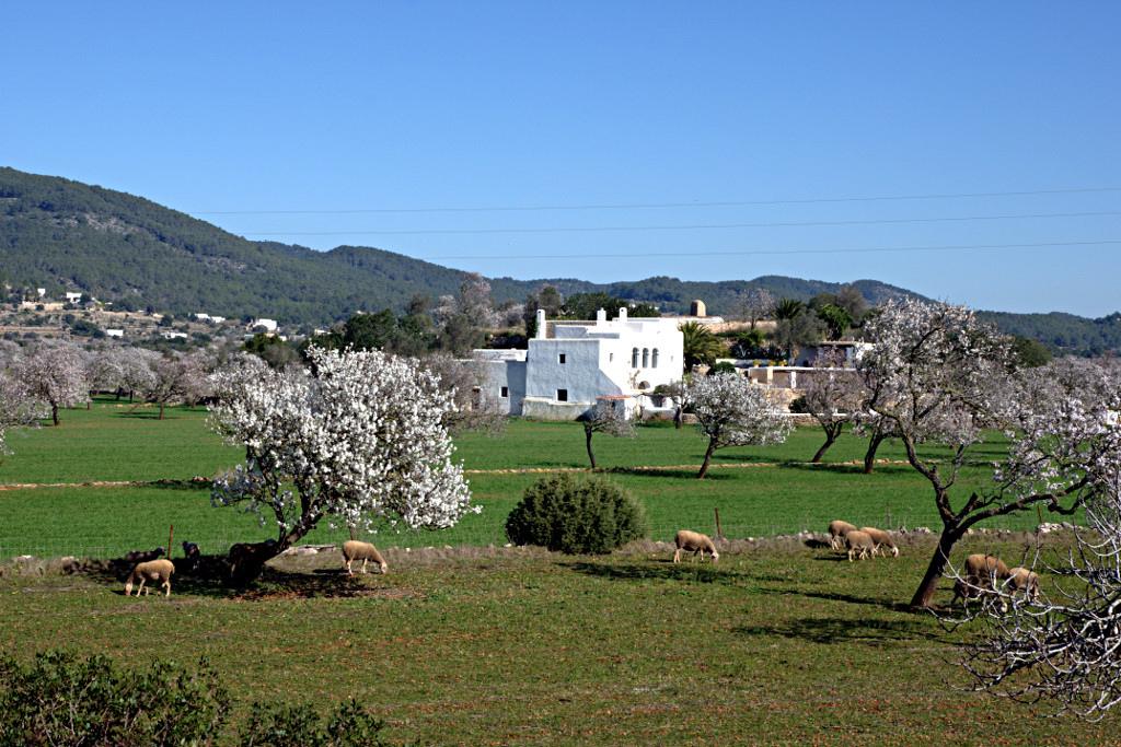 Santa-Inés